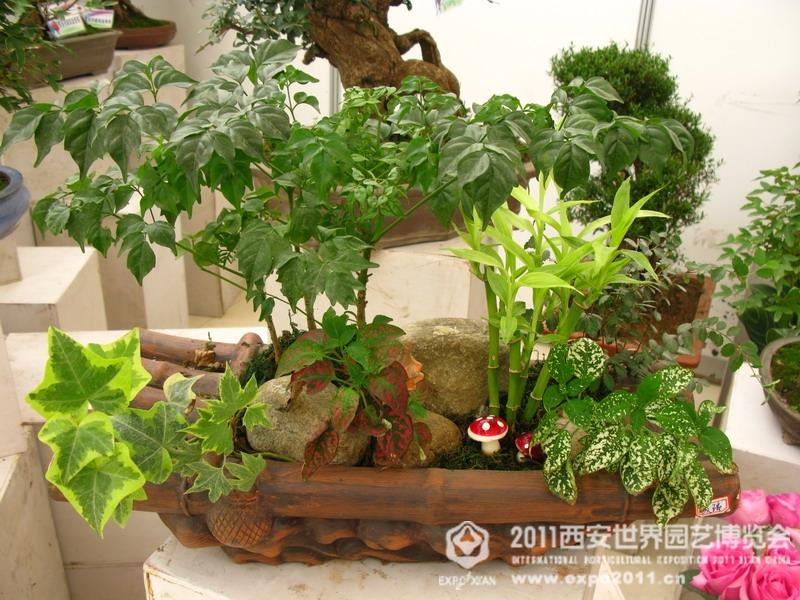 国际组合盆栽植物展览精选