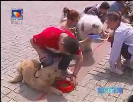 宠物大赛 助兴世博园